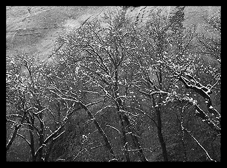 Trees Against Wall in Snow Storm