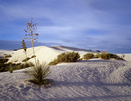 Morning, White Sands New Mexico